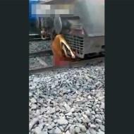 【閲覧注意】自然界も厳しい・・・動物も電車に飛び込み自殺する時代・・・