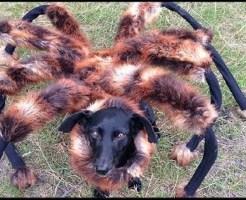 【面白】ワンちゃんに蜘蛛コスさせたら完全ホラーになったwww ※いたずら動画