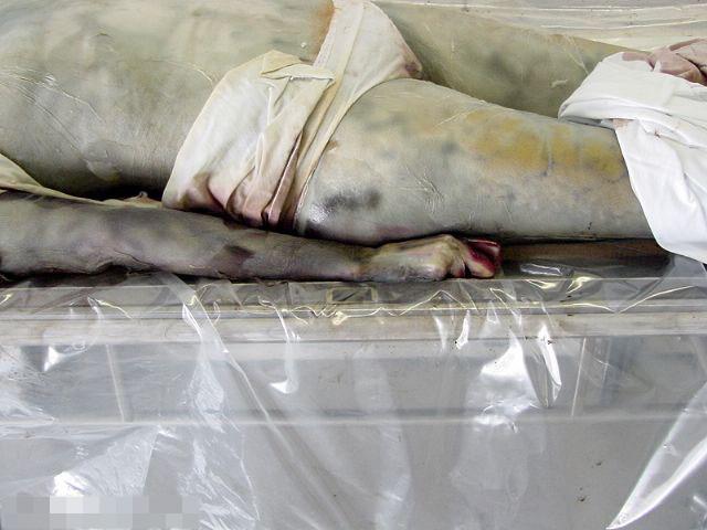 【グロ画像】ミイラ手前の死体がハルクになりかけてるんだが・・・