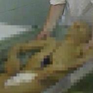 【レーニン】年間維持に2000万円かかる死体の現状がこんな感じ ※グロ画像