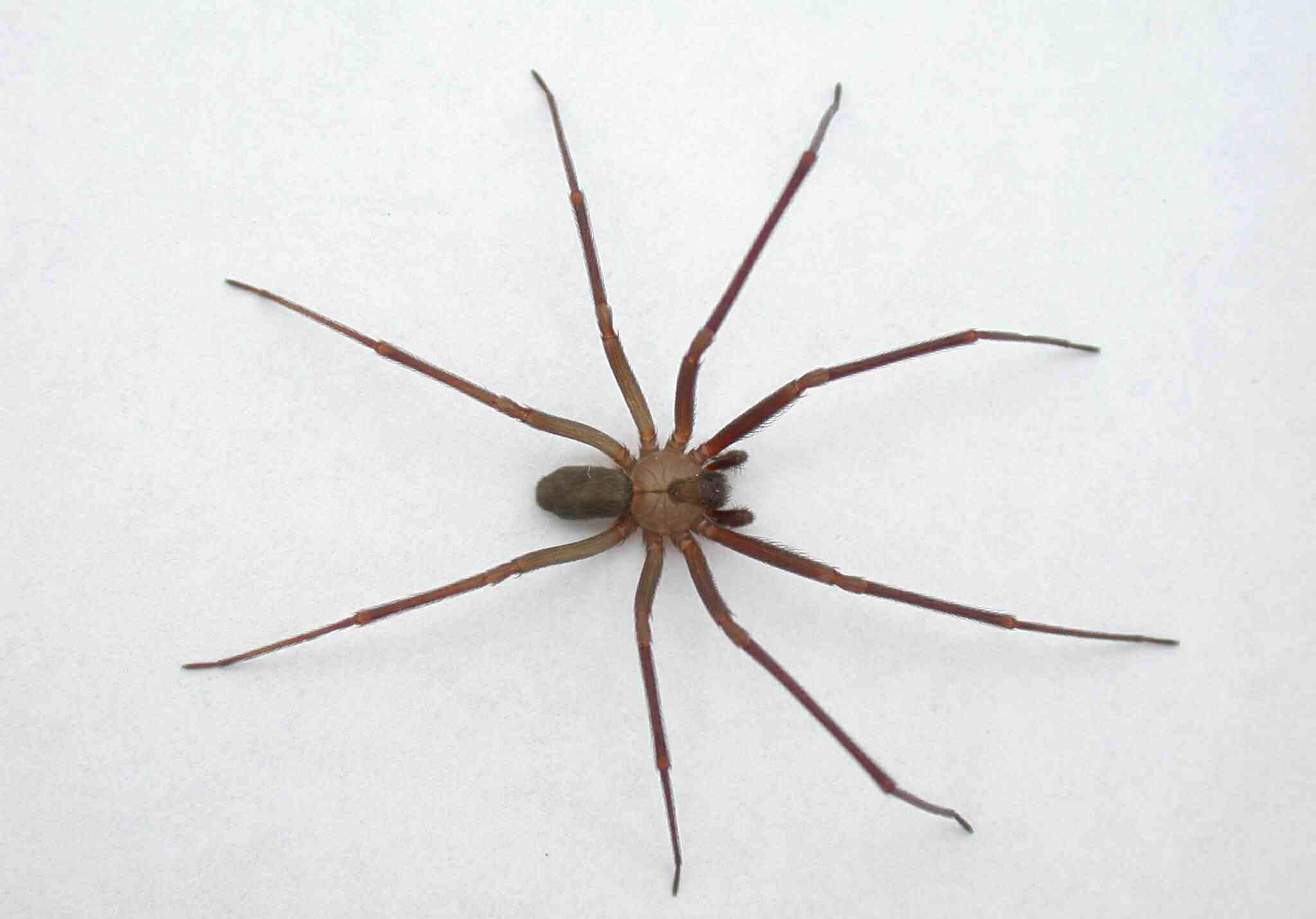【グロ画像】毒蜘蛛に噛まれて放置してたら・・・10日目に噛まれた個所が壊死した ※閲覧注意