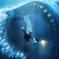 【閲覧注意】ダイバーが目の前でサメに・・・海シーズンやけど泳ぐの怖くなる・・・