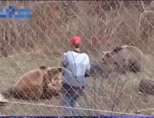 【閲覧注意】野生のクマさんに音楽演奏して仲間にしようとしたら喰い殺された・・・ ※動画