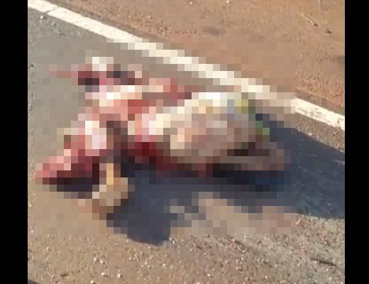 【グロ動画】道路に肉片が転がってるんだが、もともと「女」だったものらしい・・・ ※閲覧注意