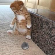 【動物映像】逃げ込んだネズミを捕獲するために取った猫の行動www