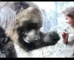 【衝撃映像】動物園の熊がガラス越しに子供を本気で食べようとしてるwww