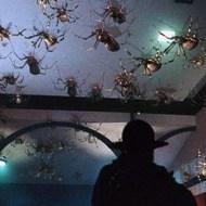 【閲覧注意】でっかい蜘蛛が人間を本気で食べにきた・・・※驚愕