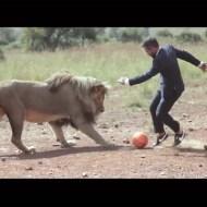 【衝撃動画】 本物の「ライオン」数頭とサッカーをしてみた!!