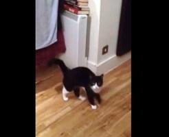 【猫動画】「どうしたのwwwww」飼い主を爆笑させた猫の奇怪な行動とは?!