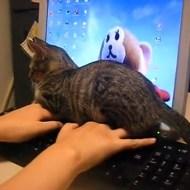 【猫動画】パソコンで作業を、考えられる限りで最大限に邪魔する猫www