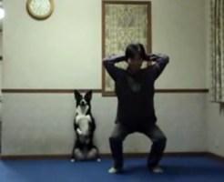 【萌え犬】飼い主と一緒に立って運動をする犬が萌えるwww