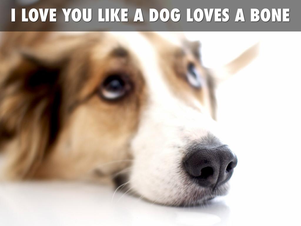 Fullsize Of I Love You Dog