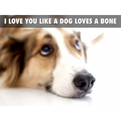 Small Crop Of I Love You Dog