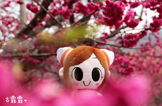 【九族櫻花祭/南投】台灣最大賞櫻盛會,九族文化村,來遊樂園囉!