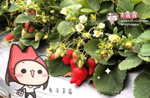 【大湖草莓季/苗栗】手採草莓享樂趣~草莓食譜多多