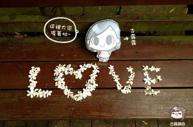 【客家桐花祭】新北市土城,桐花開了共享一季浪漫