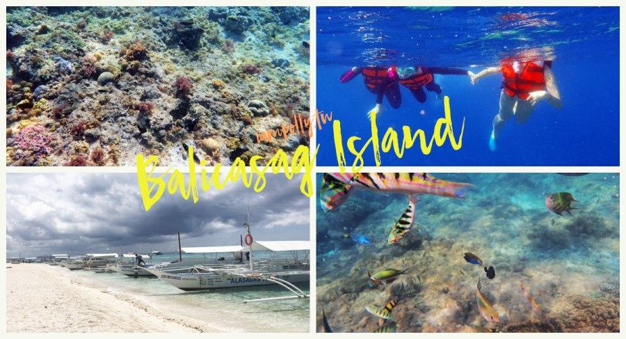 薄荷島跳島行程   巴里卡薩島Balicasag Island 浮潛餵魚,原來海裡這麼美!