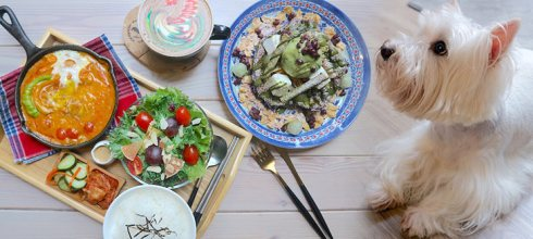 桃園早午餐「未秧咖啡」:彩虹拉花、荷蘭鬆餅、南洋咖哩雞超美味,還是寵物友善餐廳,有一汪三喵坐鎮!-台灣美食懶人包