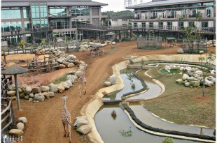 野生動物園旅館,跟長頸鹿、猴子、犀牛,一起洗洗睡,六福村生態渡假旅館