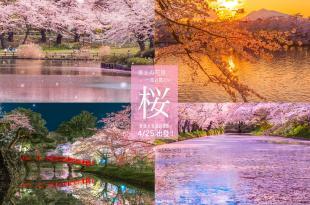 【已出團】2018日本東北櫻花團-  百本、千本、萬本櫻!東北櫻花深度攝影團