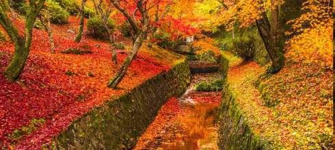 【已出團!】2019究極完全版京都紅葉~傑瑞大叔:攝影/深度旅遊5日