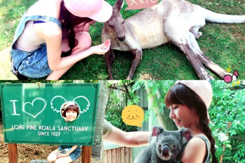 [ 澳洲布里斯本。景點 ] 龍柏無尾熊動物園 Lone Pine Koala Sanctuary ♥ 小Connie愛夢遊