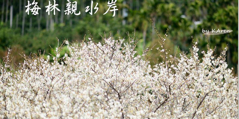 [台中。新社] 梅林親水岸賞梅去 (01/08花況)
