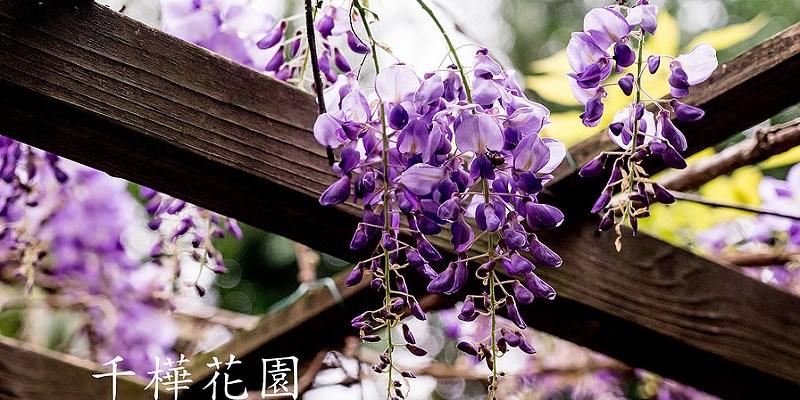 [台中。新社] 千樺花園 CH GARDEN