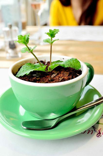 [桃園蘆竹]可以吃的盆栽!?Joyce義大利麵咖啡&下午茶