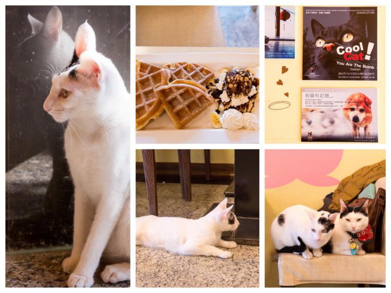 三重》野喵中途咖啡 – 讓可愛的萌貓咪與你共度下午茶時光