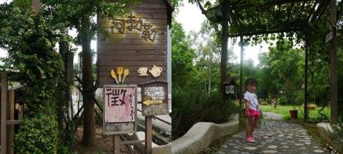 【大園】鄉村阿勃勒(2y5m2d)
