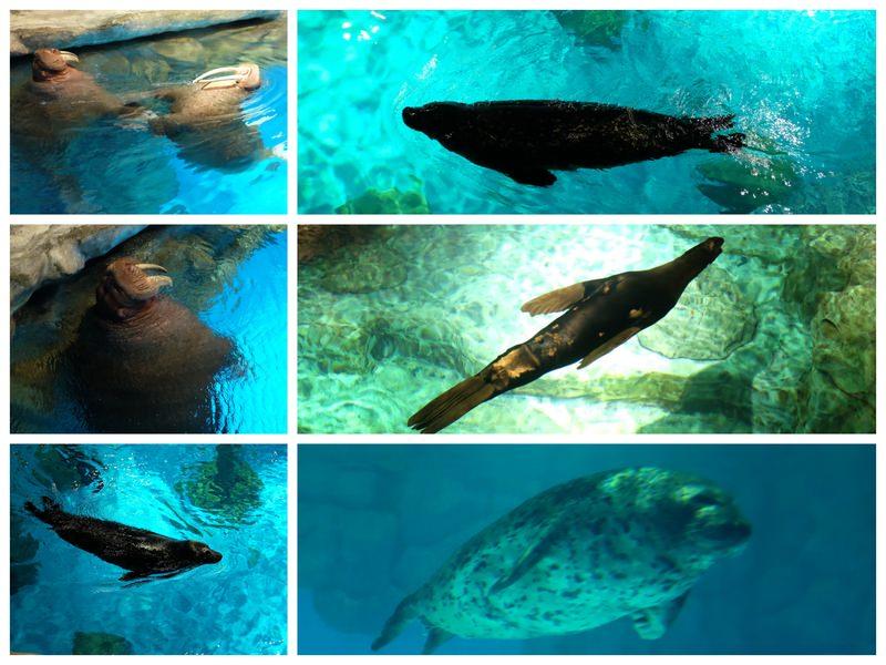 海豹海獅海狗