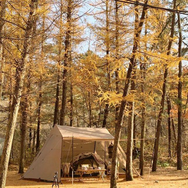 가을 캠핑 여행 그린애 캠핑장
