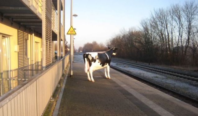 Cow, train station cow