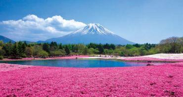 2016~2017富士芝櫻祭 河口湖富士芝櫻節(會場交通巴士資訊),富士山腳下的粉紅色地毯