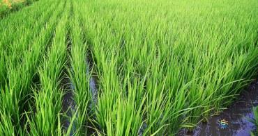 苗栗苑裡景點   稻鴨庄 看得見生命 看的見生態 生機泉源孕育的搖籃