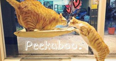 捷運新埔站美食 | 貓嘰咕 Peekaboo 板橋貓咪餐廳 寵物餐廳 輕食 義式料理