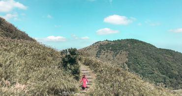 陽明山芒草2018 七星山冷水坑步道:跟擎天崗不同的芒草步道❤(七星山怎麼去、七星山冷水坑公車、台北芒草)