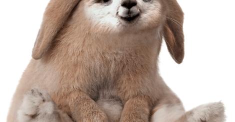 突變基因的動物?!電影裡的奇幻動物寫真\\草迷馬兔子也太像皮卡丘了//