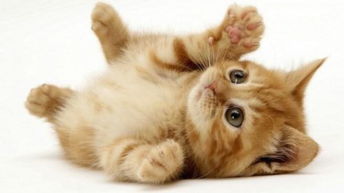 在猫科动物的世界里所有的侵略行为都从