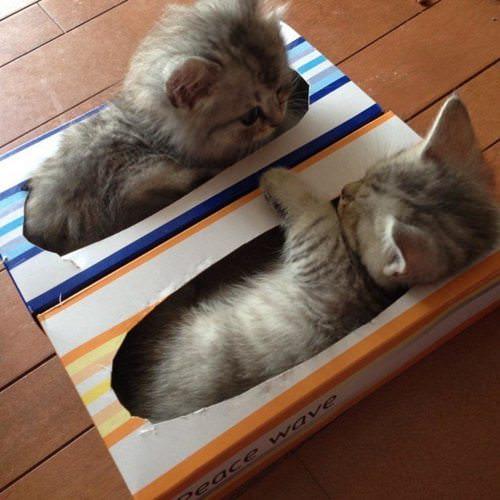 18张超可爱动物睡觉照