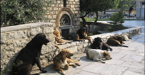 希臘這家咖啡廳對流浪狗做了一件事讓所有人驚嘆
