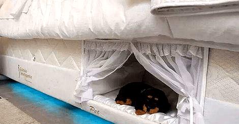 【寵物】這張床動了手腳!可以讓妳和寶貝寵物近距離一起睡上下舖!