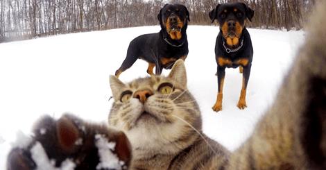 【寵物】貓咪也會自拍?可愛到讓人融化的貓咪自拍照!