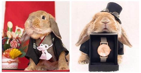 【寵物】超療癒!百變的兔子讓人心都融化了!