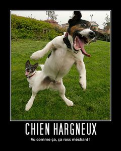 chien-hargneux.jpg