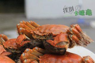 【食記】秋冬‧大閘蟹