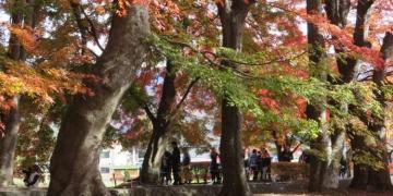 日本河口湖 Cheesecake garden 富士山餅乾 紅葉迴廊