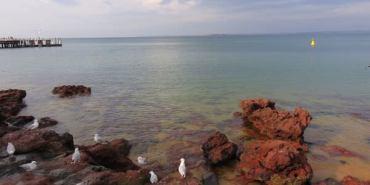 澳洲。墨爾本 Philip Island Penguins 一日遊 one day tour