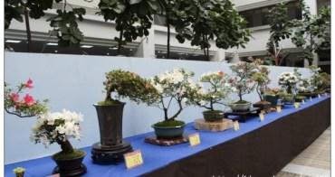 2016年臺中市皐月花季展在台中市府豐原陽明大樓
